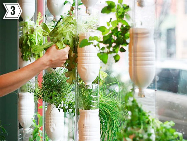 Tending a hydroponic window garden made of plastic bottles.