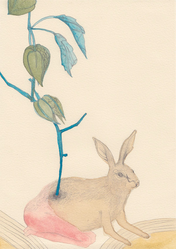 "Kelly Rae Burns' ""Plants and Animals"" drawing, Chinese Lantern"