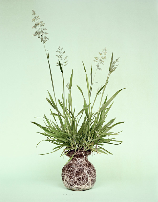 Diana Scherer's Nurture Studies flower photographs