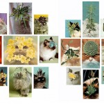 Stephen Eichhorn's Plants and Animals