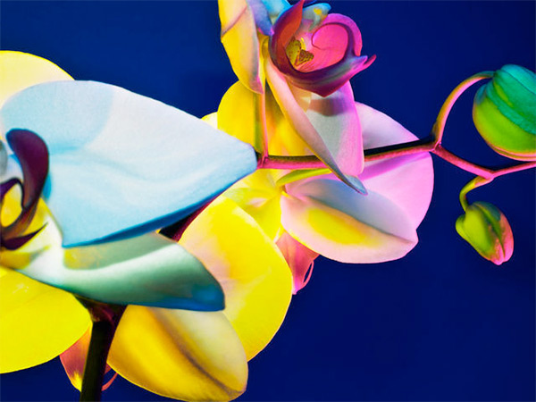 Hot House neon flowers by Torkil Gudnason