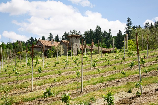 A Tuscan villa with vineyard grapes at home in Oregon.