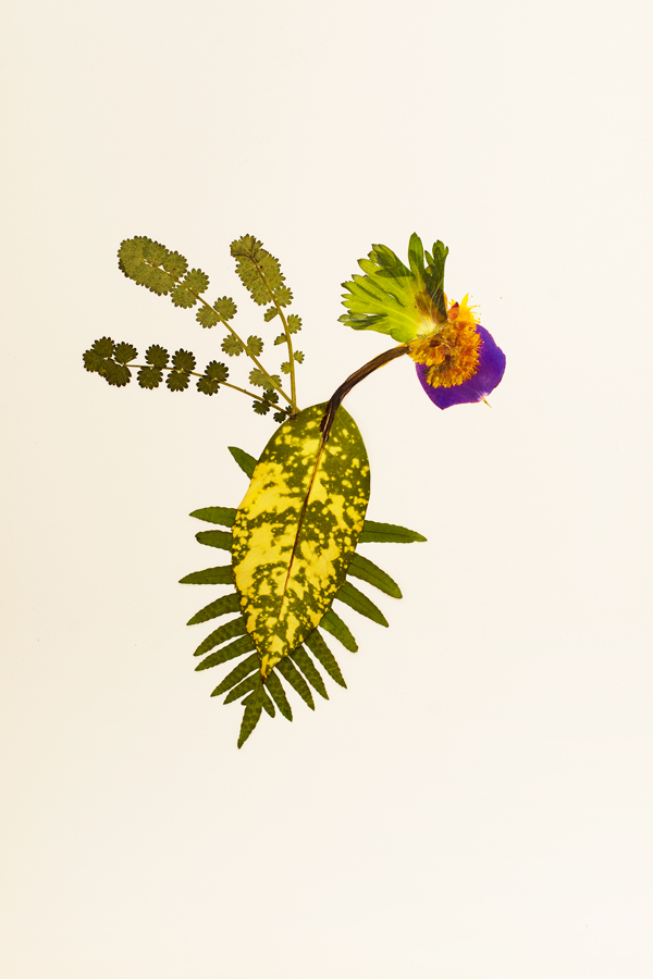 Plant collage for The Plant Journal by Ana Dominguez.