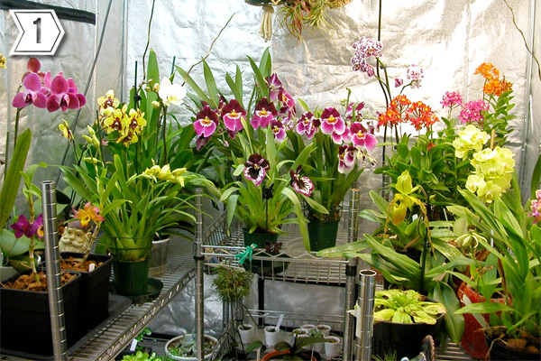 An indoor orchid grow room.
