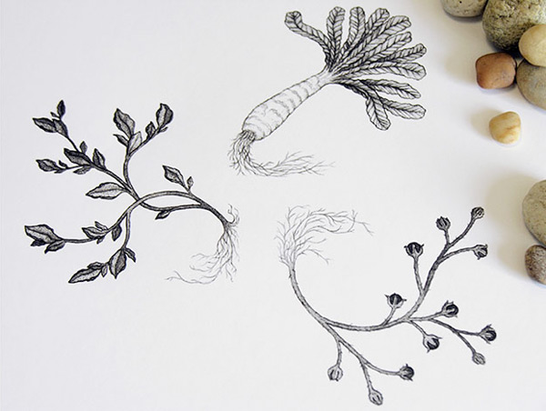 Sasha Prood's botanical illustration