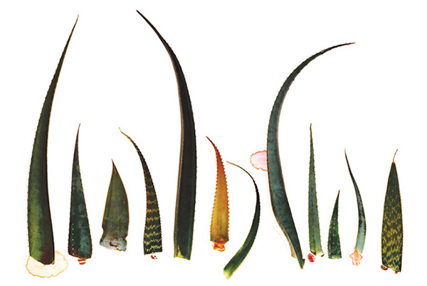 Clinton Friedman's botanical prints
