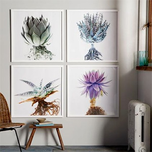 Clinton Friedman botanical wall prints