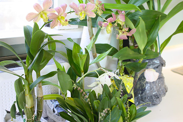 Mail order orchids