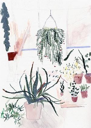 Alicia Galer's botanical illustration