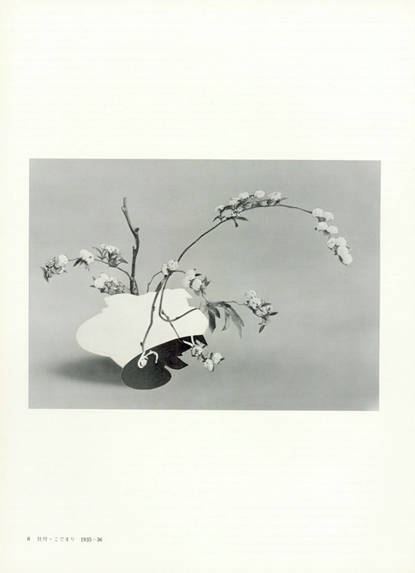 Black and white abstract plant collage by Leigh Wells