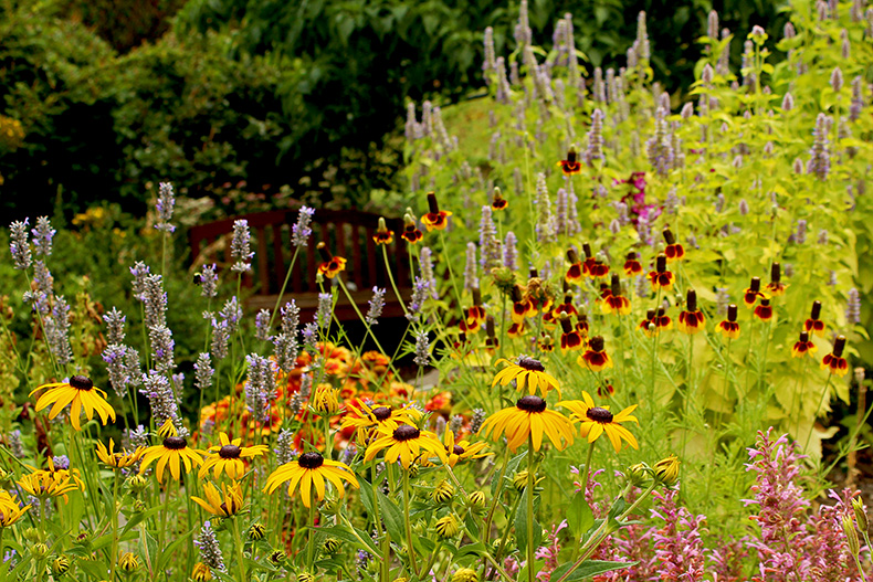 Mixed bed with coneflower and rudbeckia at The Oregon Garden
